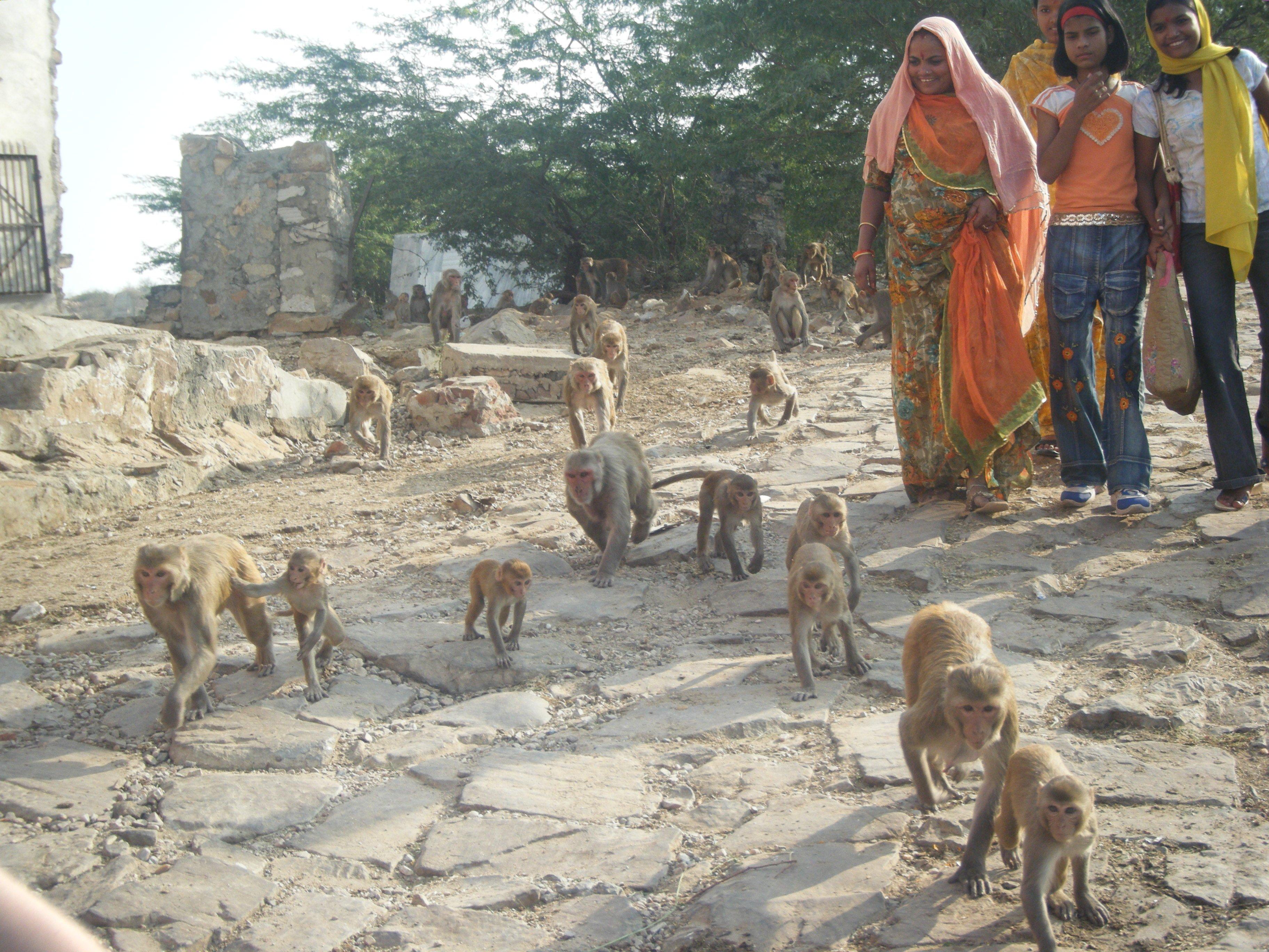 Rajasthan, ville de Jaïpur